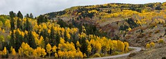 Autumn Curve (SWR Chantilly) Tags: colorado fall autumn drive gunnison