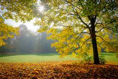 more autumn (tvdijk19) Tags: autumn sun light sunlight sunburst leaf