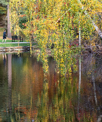 Run (DaveLawler) Tags: runner jogger foliage run tree leaves yellow birch water reflections elmpark worcester massachusetts pond chancyrendezvous