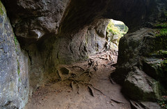 "Old ""Road"" (martinstelbrink) Tags: luxemburg luxembourg deutschluxemburgischernaturpark germanluxembourgnaturepark eifel südeifel sony alpha7rii a7rii voigtländervmeclosefocusadapter leicasummicron35mmf20preasph leicasummicron35mmf20i leica summicron 35mm f20 preasph cave höhle tunnel roots wurzeln sandstein sandstone"