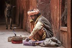 Snake charmer (Dick Verton ( more than 13.000.000 visitors )) Tags: india travel varanasi snakecharmer streetlives streetimage streetshot streetview asia dog