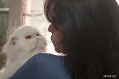 _DSC4440 (Adriano Clari) Tags: cat gatto pet animal breeder allevamento indoor interno adriano clari animale domestico gattino