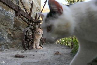 Richard Gere, The Photobomber :-)))