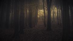 Breathing Forests (Netsrak) Tags: baum bäume eu europa europe forst januar january landschaft natur nebel wald fog forest landscape mist nature tree trees winter woods