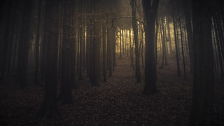 Breathing Forests