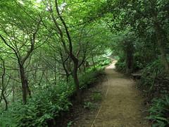 Bath - at Prior Park (Dubris) Tags: england somerset bath priorpark nationaltrust landscapegarden georgian path woodland slope
