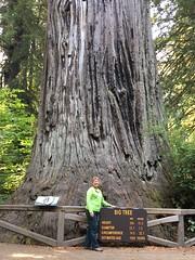 Big.Tree.DebK (redwoodcoaster) Tags: humboldt redwoods redwood coast national park travel california eurekaca