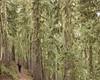 Mt Hood IV (Gustaf_E) Tags: america forest mossa mthood oregon paradisevalley skog usa woods