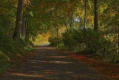 Autumn (JLM62380) Tags: autumn road leaves trees wismes france salvecques bois arbres feuillesmortes