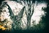 Gargoyle (Off The Beaten Path Photography) Tags: canon 5dmarkiii backroads indiana country gargoyle
