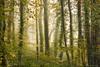 Woodsmoke (Sarah_Brooks) Tags: trees landscape treescape woods woodland smoke misty woodsmoke morning autumn green fall somerset