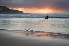 Bondi Beach Surfer_Part 2 (Marcel Jakob) Tags: australia australien bondi beach surfer sydney water bird wave gull sunrise sonnenaufgang bondibeach