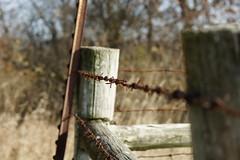DSC00352 (baylersmith) Tags: minnesota state park nature statepark hunting dog fall
