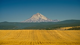 Mt Hood and Wheatfield 3236 C