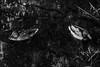 DR150609_482D (dmitryzhkov) Tags: art europe russia moscow life face light shadow dmitryryzhkov sony walk black blackandwhite bw blacknwhite bnw monochrome white river water duck couple bird nature animal animals birds