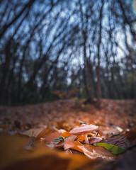 DSC_2075.jpg (ruud.snijders) Tags: forrest erks woods reigersbroek woodlands rozendaal bos fall herfst