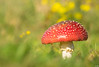 Flying Fungus (Martine Lambrechts) Tags: flying fungus autumn mushroom macro nature