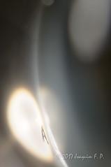 En el principio (Joaquim F. P.) Tags: joaquimfp nikon macro micronikkor 105mm 105mmf28dmicro a alpha alfa principio luz