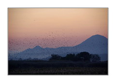 Envol nocturne / Baie de Suncheon - Corée (PtiteArvine) Tags: coucherdesoleil sunset oiseaux montagnes volcan suncheon baiedesuncheon coréedusud parcnaturel