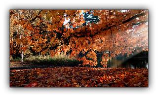 Ballade automnale (Autumn walk) 2
