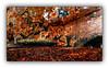Ballade automnale (Autumn walk) 2 (Jean-Louis DUMAS) Tags: automne autumn feuilles arbre tree colors color couleur paysage landscape parc dxo one dxoone ombres lumières explore inexplore