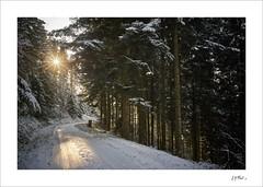 Boulevard des mushers... (Jack O'Donate) Tags: ilce7rm2 voigtlander35mmf17ultron paysagerural beaujolais coldujoncin flickrdiamond