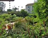 Rain Chain and garden - Constance Vadheim - edited (CA Native Plant Society) Tags: cnps california native plant society garden ambassador demonstration rain chain water feature capture hummingbird sage salvia spathacea southern spring landscape