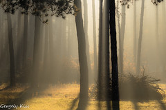 A morning tale. (Gergely_Kiss) Tags: erdo hajnal fog mist lightandshadow nature veresegyház hungary autumn shiningthrough morningforest morningwoods