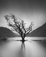 exile (Illogical_images) Tags: connemara trees bnw mono blackandwhite black white longexposure nd firecrest hitech sony a7r illogicalimages dark landscape