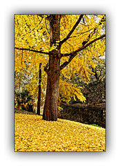 Ballade  automnale (Autumn walk) 5 (Jean-Louis DUMAS) Tags: automne autumn feuilles arbre tree colors color couleur paysage landscape parc dxo one ombres lumières explore eau bois lac rivière forêt
