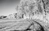 Cold winter morning (++sepp++) Tags: bayern deutschland graben landscape landschaft landschaftsfotografie lechfeld rauhreif winter bw blackwhite länder de monochrom sw schwarzweis einfarbig bavaria germany