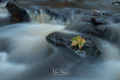 lonely leaf (fire111) Tags: lonely leaf eenzaam blad le autumn water ardennes color rocks nature river belgium