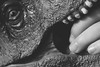 EnToyment (amarilloladi) Tags: dinosaur macromondays fingertips trex toys teeth tyrannosaurusrex childsplay blackandwhite bw monochrome