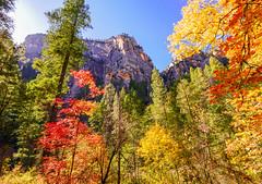 """Autumn in Arizona"" (Cathy Lorraine) Tags: autumn fall sedona arizona hiking outdoors nature sunshine mountains canyon trees foliage colorful forest landscape sky tree southwest"