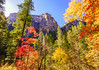 """Autumn in Arizona"" (Cathy Lorraine) Tags: autumn fall sedona arizona hiking outdoors nature sunshine mountains canyon trees foliage colorful forest landscape sky tree southwest"