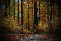autumn (F VDS) Tags: path autumn forest sonian nikon lomoeffect trees landscape leaves trail bushes shotfromground d3