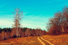 (Alin B.) Tags: alinbrotea autumn nature fall toamna rusty rustic october november tree woods road path