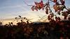 Coucher de soleil dans les vignes (x.sicard) Tags: coucherdesoleil vignes