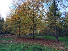 Autumn (Marc Sayce) Tags: arboretum trees colours fall leaves lodge autumn november 2017 alice holt forest hampshire farnham surrey south downs national park