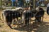 IMG_1241 (goaniwhere) Tags: wolf animal wolves wildanimal sanctuary