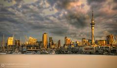 Sunlit Auckland Skyline