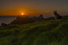 _JMK0194 (jimmckay77) Tags: dunnottar castle dunnottarcastle sunrise dawn clifftop dog germanshepherd morning