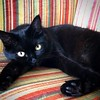 (rfellipe) Tags: blackcat cat gatopreto gato felino catmoments