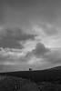 The Couple (M-Z-Photo) Tags: gnotzheim bayern deutschland de schwarzweis landschaft felder bäume wolken himmel minimalismus germany