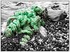 Flotsam at the Baltic Sea (unukorno) Tags: flotsam balticsea ostsee sassnitz mecklenburgvorpommern deutschland rope seil green grün stones steine beach strand rügen