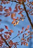 Autumn outside my Childhood Bedroom (hilarybachelder) Tags: leaves blue sky tree branches autumn fall season foliage thanksgiving november sun light sunlight childhood home hometown leadinglines lines shapes geometry a7rii captureone golden nj nature vantagepoint viewpoint sony sonya7rii 85mm gmaster bokeh up parallel red orange dof princeton peaceful gratitude tranquil grateful mirrorless fullframe sel85f14gm