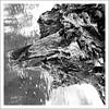 J'ai enconre rencontré un monstre ! (michellouvel85) Tags: souche monstre sécheresse rivière arbre noiretblanc