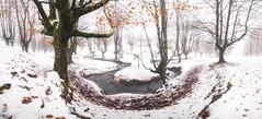 White Forest (BIZKAIA) (Jonatan Alonso) Tags: otzarreta forest snow winter bizkaia gorbea river white landscape autumn laowa75