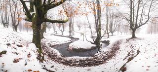 White Forest (BIZKAIA)