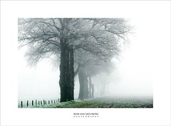 it's the most wonderful time of the year (Zino2009 (bob van den berg)) Tags: winter frost ice cold wintertime trees row inline fog mist nebel bäume lace fine white grass fence sight meters thick dutch holland freezing netherlands landscape where perspective zino2009 bobvandenberg